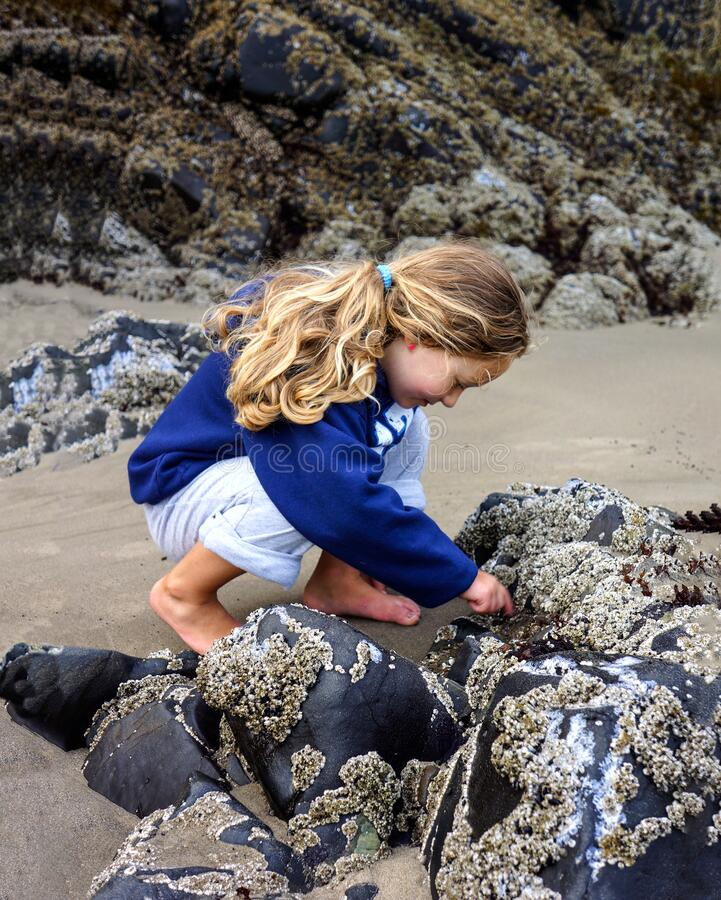 Free Child Explores Tide Pool On Beach Royalty Free Stock Photography - 172618297