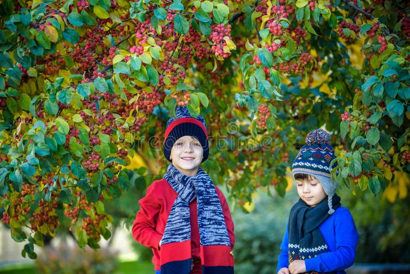 Child on a farm in autumn. Little boy and his brother friend playing in decorative apple tree orchard. Kids pick fruit. Toddler royalty free stock photography