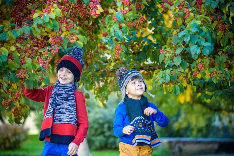 Child on a farm in autumn. Little boy and his brother friend playing in decorative apple tree orchard. Kids pick fruit. Toddler royalty free stock photo