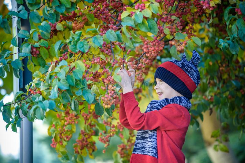Child on a farm in autumn. Little boy playing in decorative apple tree orchard. Kid pick fruit. Toddler eating fruits at harvest. royalty free stock photos