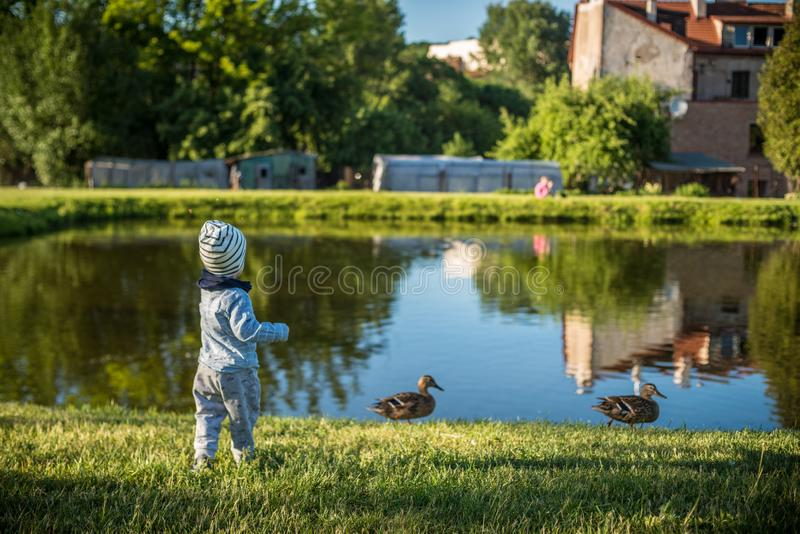 Child feeding birds near pond stock images
