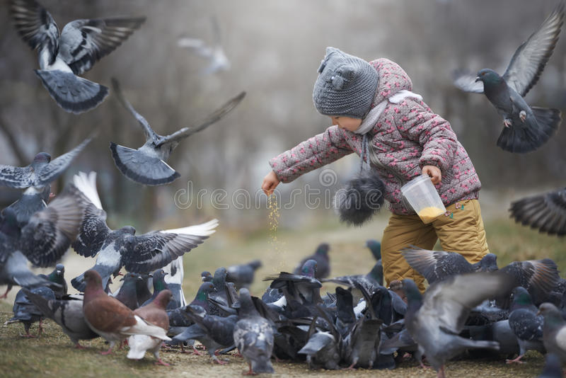 Child feeding a crowd of grey and two brown pigeons royalty free stock image