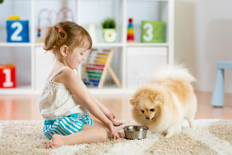 Child feeding dog. Child feeding pomeranian Spitz dog at home royalty free stock photography