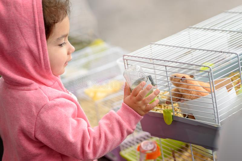 A child feeding hamster a water. Toddler child young girl playing with pet hamster. royalty free stock photo