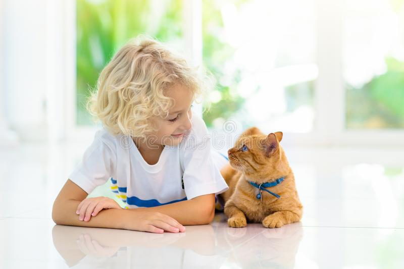 Child feeding home cat. Kids and pets. Child feeding cat at home. Kid and pet. Little blond curly boy playing with kitten in white kitchen at window. Domestic stock photo