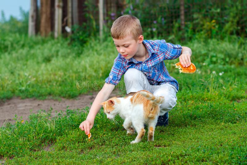 Child feeding homeless ginger cat royalty free stock images