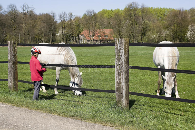 Child feeding horse. On the meadow royalty free stock photos
