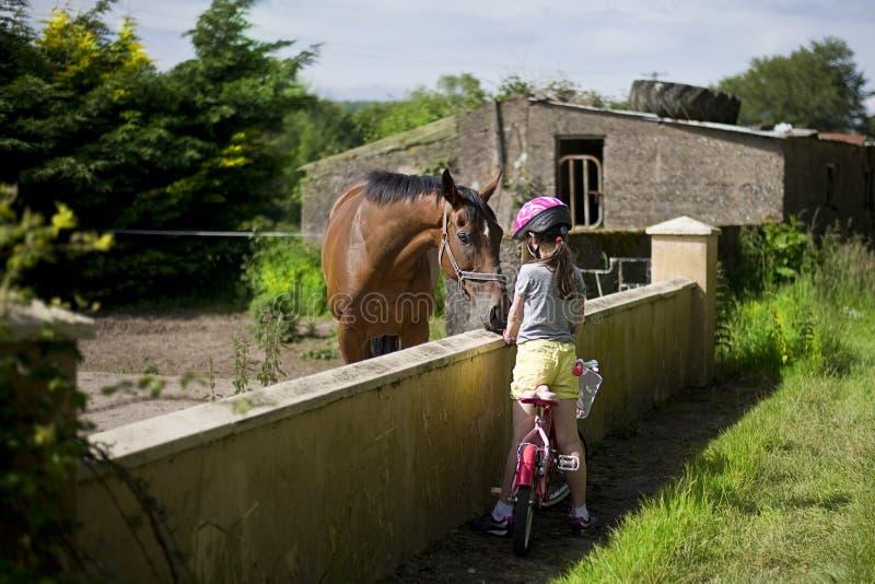 Child feeding a horse royalty free stock image