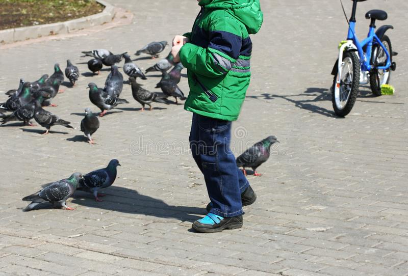 Boy and pigeons. stock photo. Image of fauna, walking ...