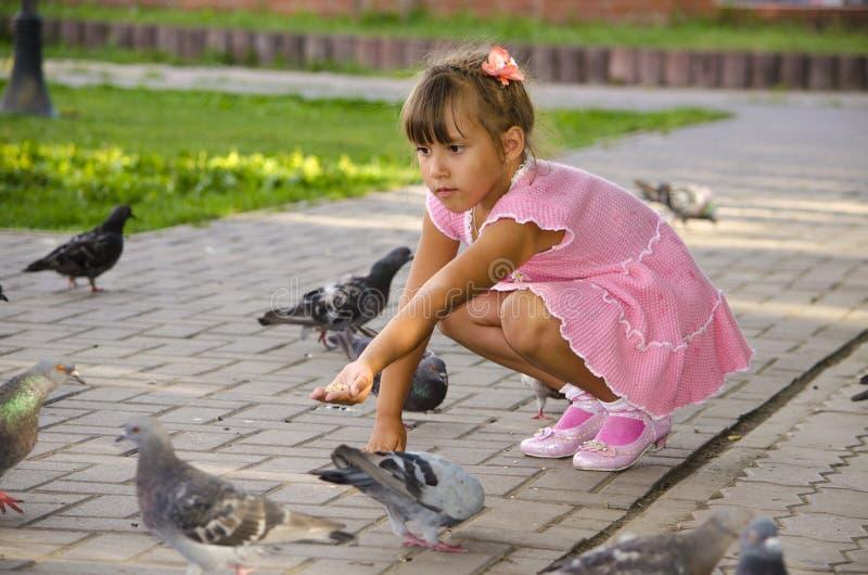Child feeding pigeons stock photo