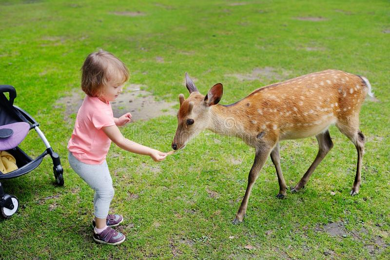 Child feeding wild deer at petting zoo. Kids feed animals at outdoor safari park. Kid and pet animal. royalty free stock photos