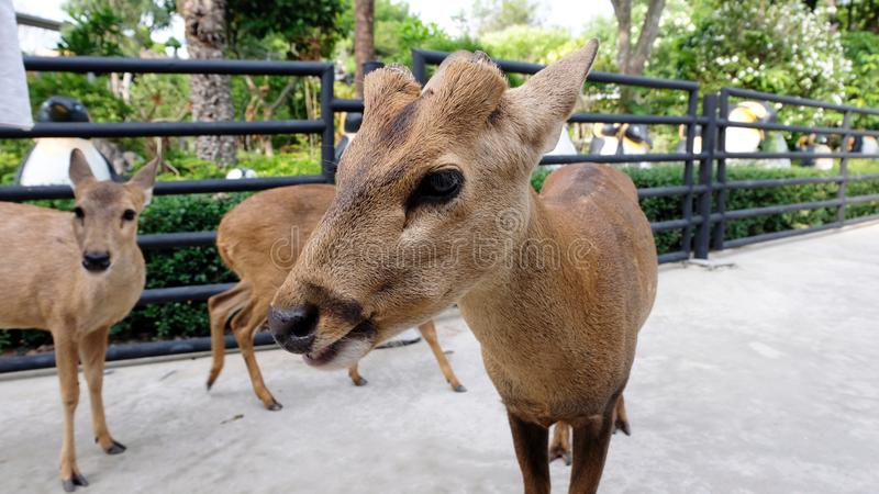 Child feeding wild deer at petting zoo. Kids feed animals at outdoor safari park. Little girl watching reindeer on a farm. Kid and royalty free stock images