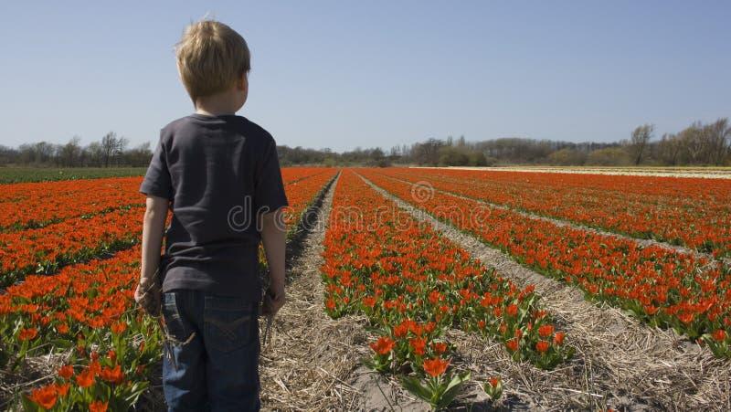 Child in flower field stock photo