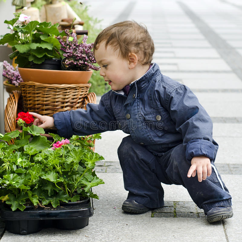 Child and flower pot. Baby or a small toddler child looking flower in a flower pot on a patio or street garden royalty free stock images