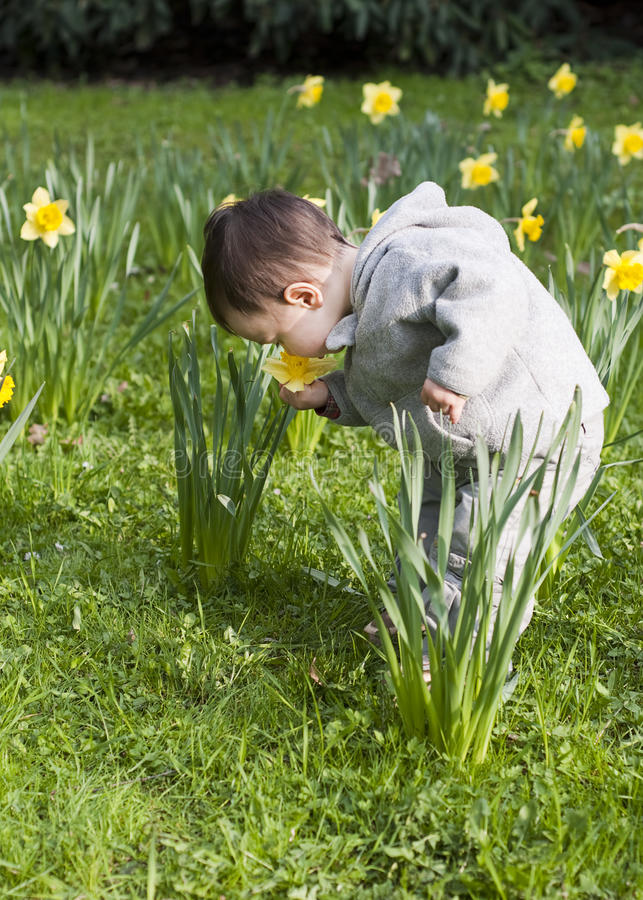 Child in flowers stock photography