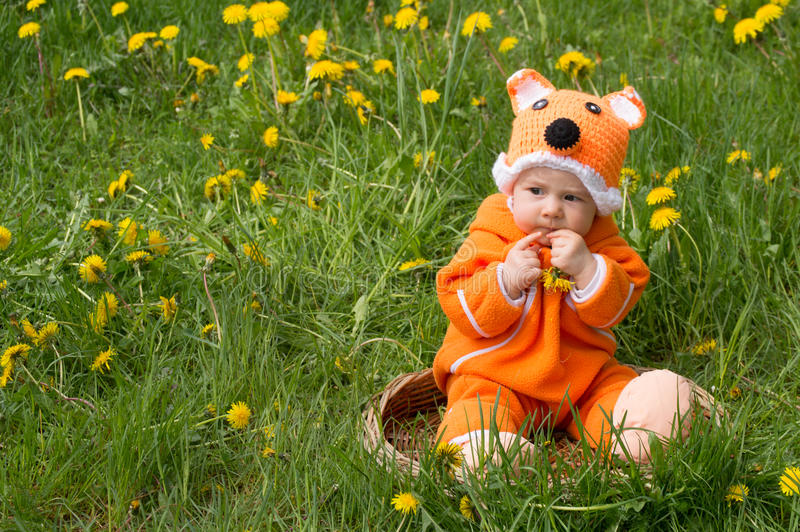 Child in a fox suit. Infant kid in a fox suit in dandelion field royalty free stock photos