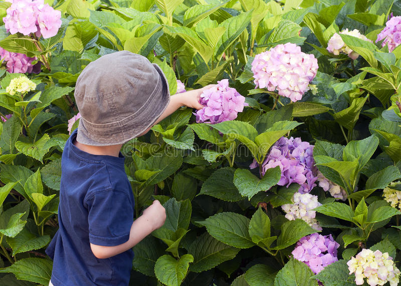 Download Child in the garden stock photo. Image of flowers, head - 28856678