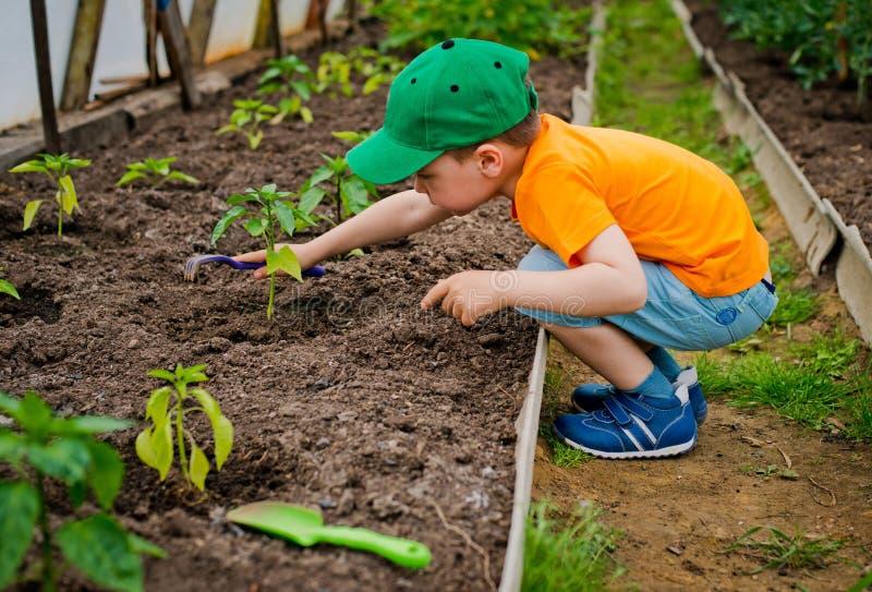 Child in the garden stock photos
