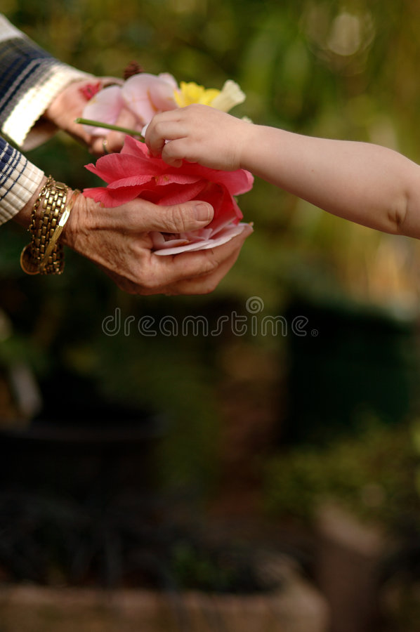Free Child Gifting Flowers Royalty Free Stock Photography - 1974197