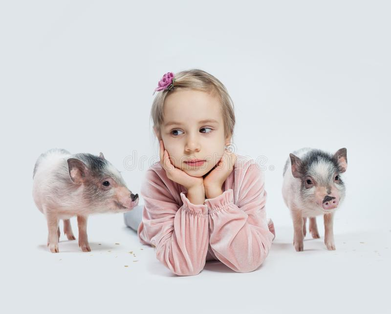 Child girl and mini pigs on white background, portrait stock images