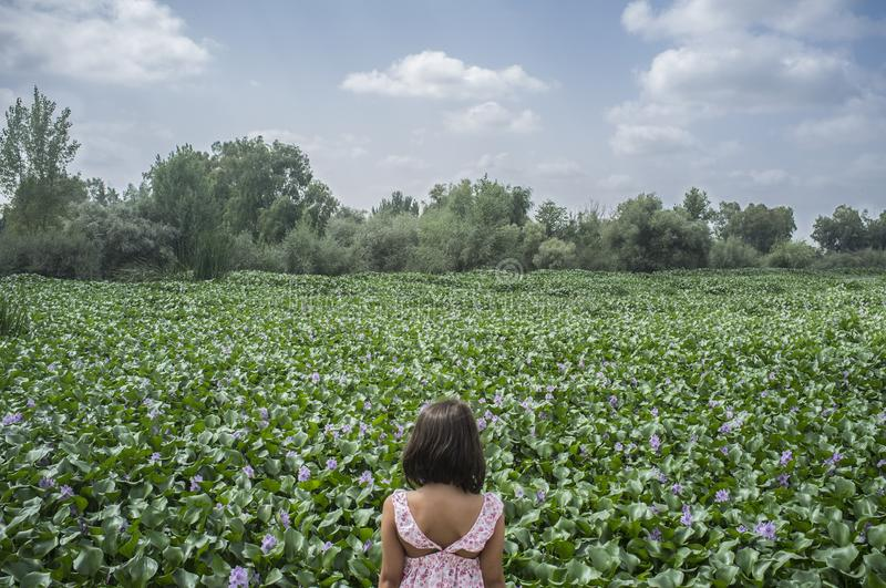Child girl over water hyacinth bank. Invasive plants on rivers c. Child girl over invasive water hyacinth, taking over the whole course of Guadiana River, near royalty free stock images