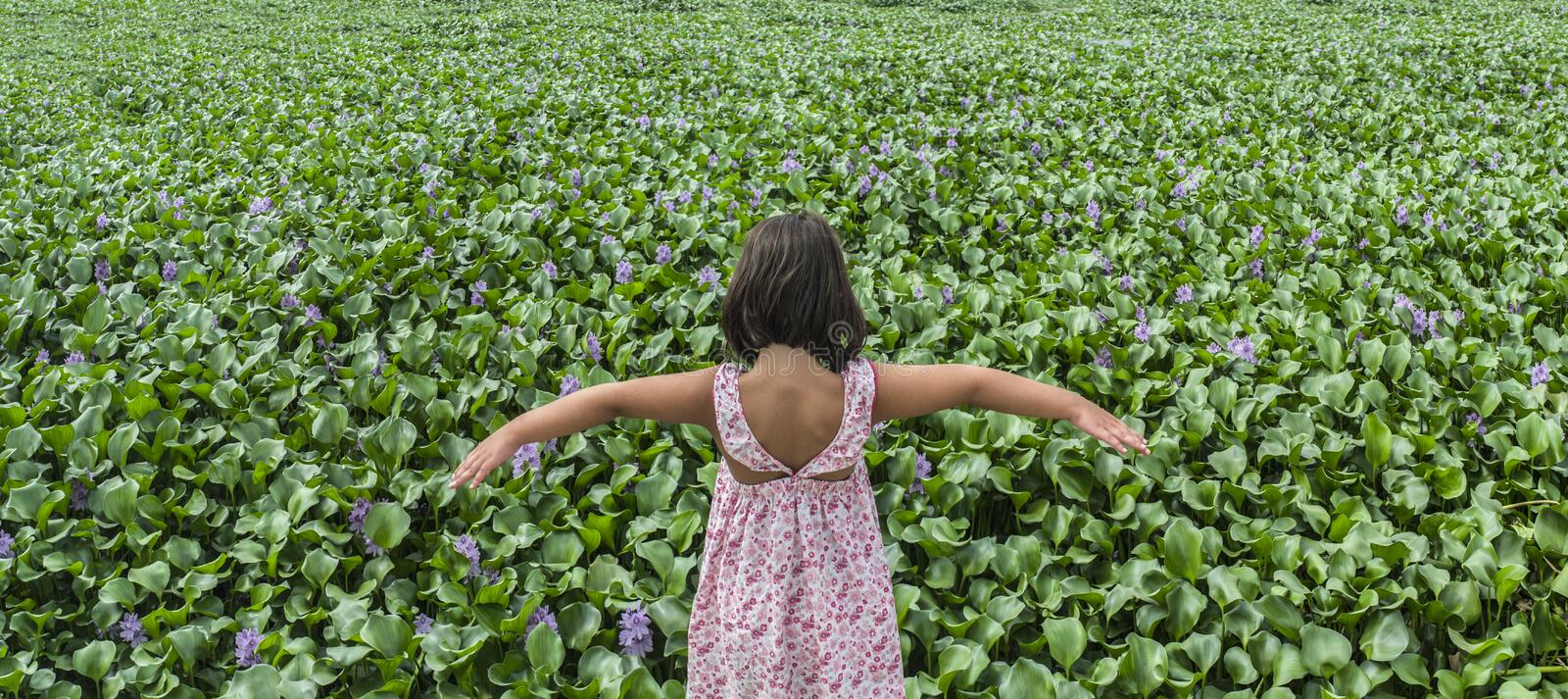 Child girl over water hyacinth bank. Invasive plants on rivers c. Child girl over invasive water hyacinth, taking over the whole course of Guadiana River, near royalty free stock image