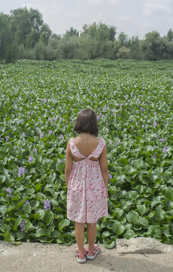 Child girl over water hyacinth bank. Invasive plants on rivers c. Child girl over invasive water hyacinth, taking over the whole course of Guadiana River, near stock photo
