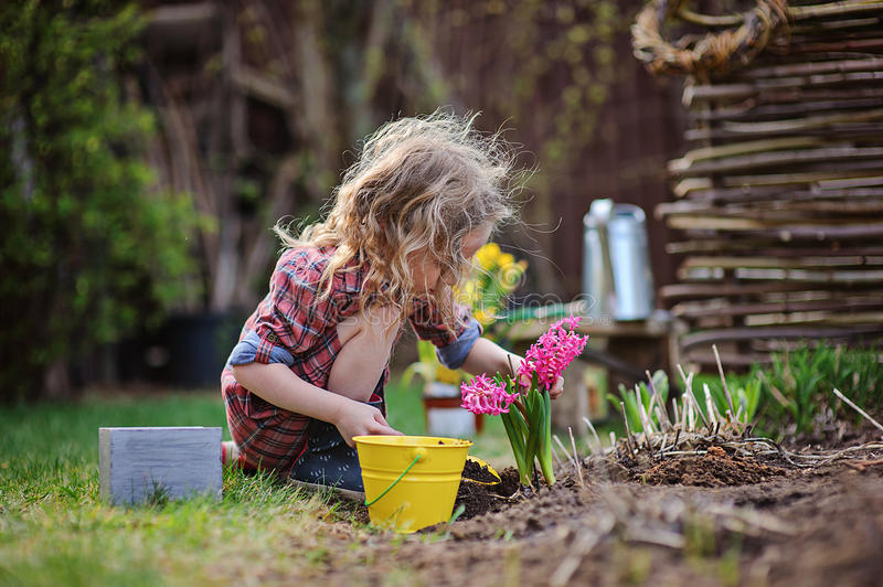 Child girl planting hyacinth flowers in spring garden royalty free stock photography