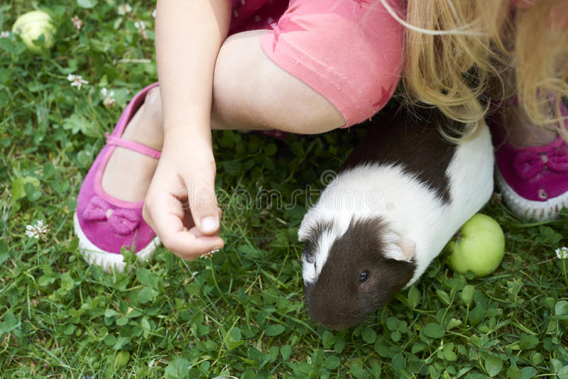 Child Girl relaxing and playing with her guinea pigs outside on green grass lawn stock image