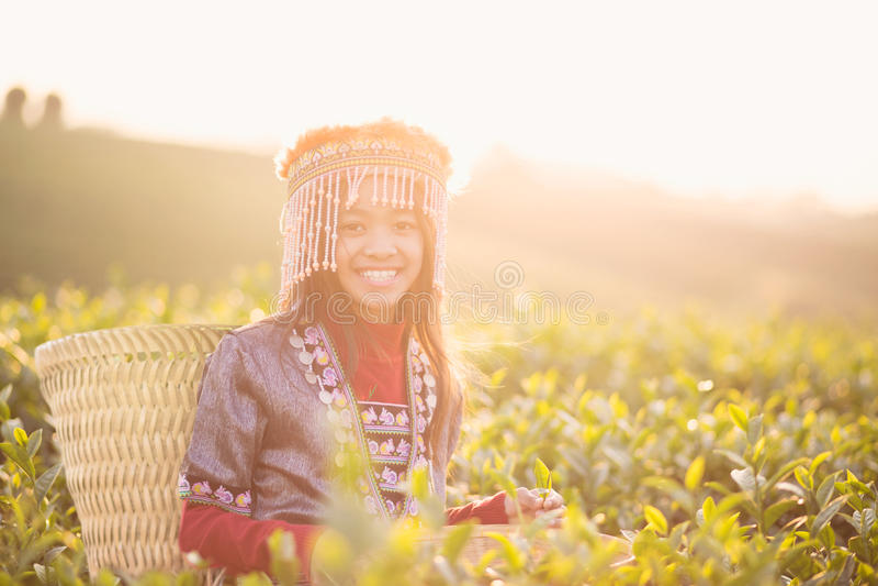 Child girl tribal. In green tea farm , Chiang rai, Thailand stock photos