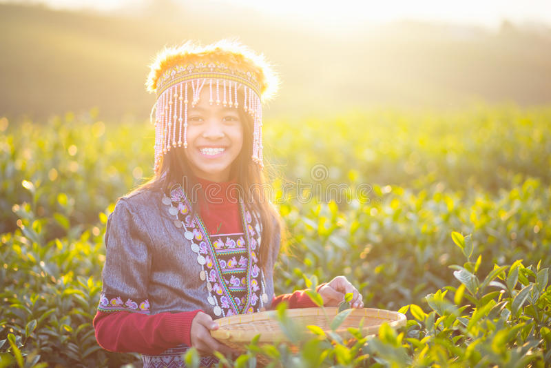 Child girl tribal. In green tea farm , Chiang rai, Thailand stock photography