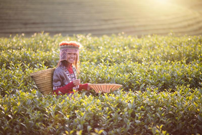 Child girl tribal. In green tea farm , Chiang rai, Thailand royalty free stock photography