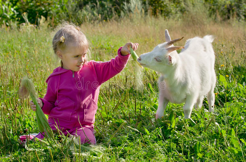 A child with a goat stock photos