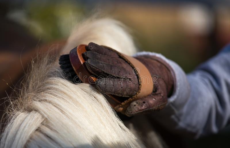 Child grooming horse with brush. Close up of child`s hand with gloves holding brush and grooming pony horse royalty free stock photo