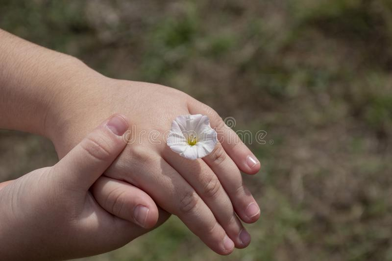 Child hand holding another child hand with flower like a ring in front of a field stock photography