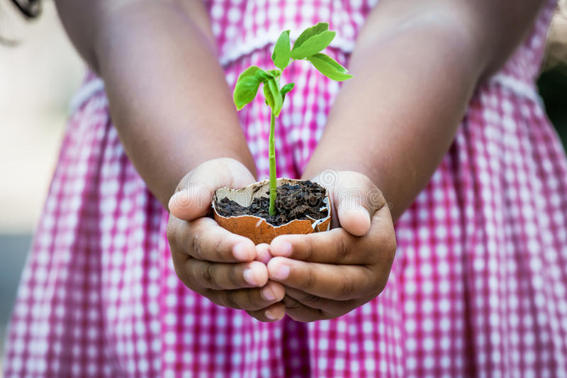 Child hand holding young tree in egg shell royalty free stock photography