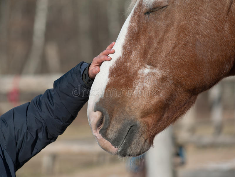 Child hand and horse. Kid hand caressing horse close up stock photography
