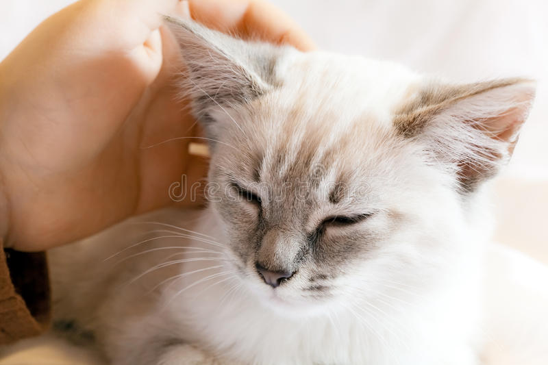 Child Hand and Kitten royalty free stock image