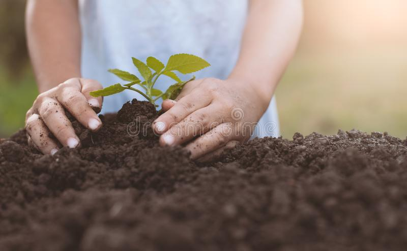 Child hand planting young tree on black soil. As save world concept stock images