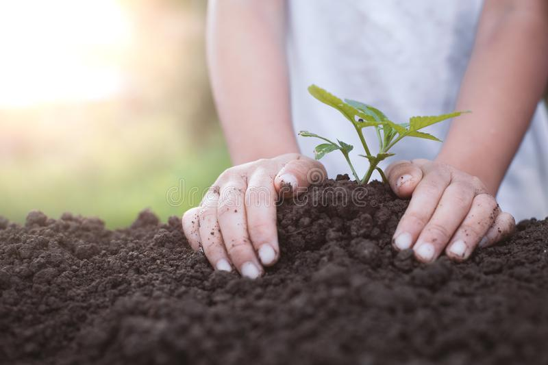 Child hand planting young tree on black soil royalty free stock images
