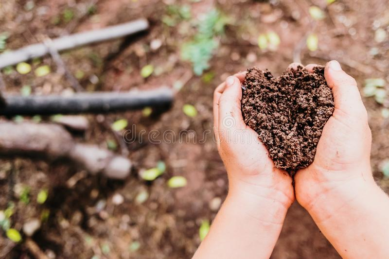 Child hands collect fertile soil from a forest to germinate plants and take care of nature stock photos