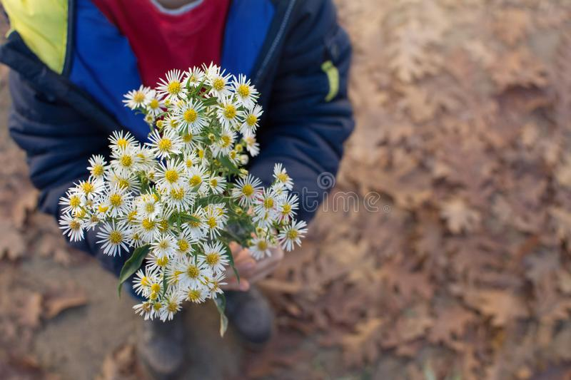 CHILD HANDS HOLDING A BOUQUET OF DAISIES. HIGH ANGLE VIEW stock photos