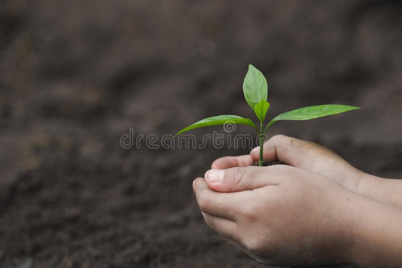 Child hands holding and caring a young green plant, Seedlings are growing from abundant soil, planting tree, reduce global warming royalty free stock photography