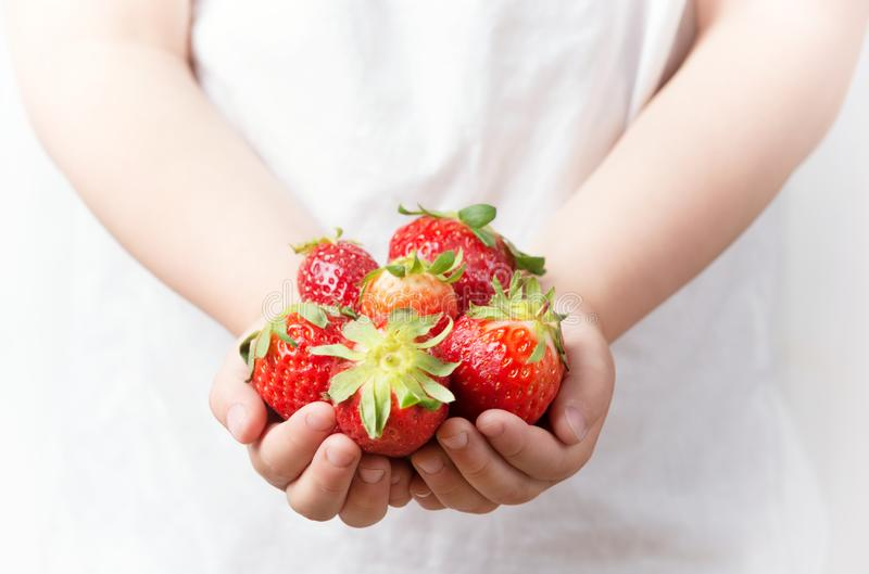 Child hands holding fresh ripe strawberries, healthy eating for kids stock photos