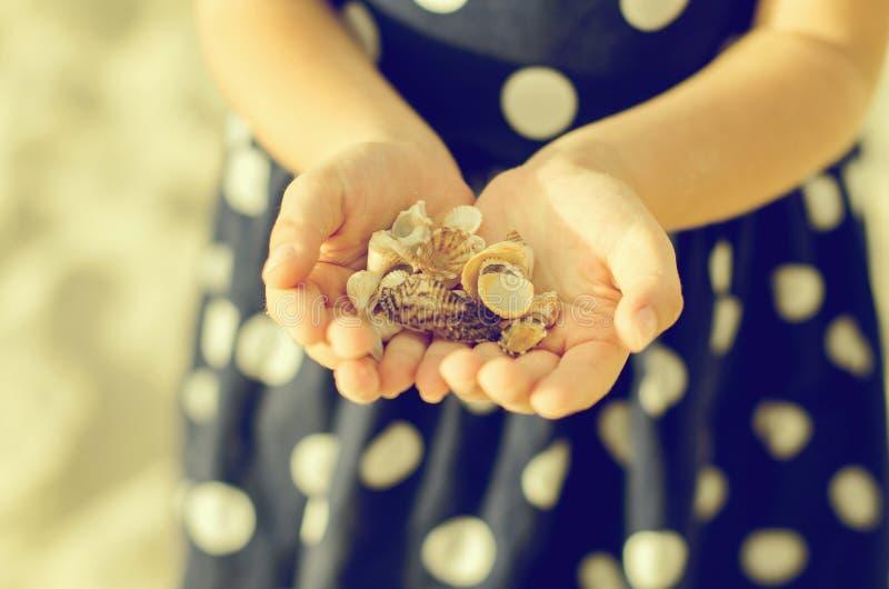 Child hands holding sea shells. stock photo