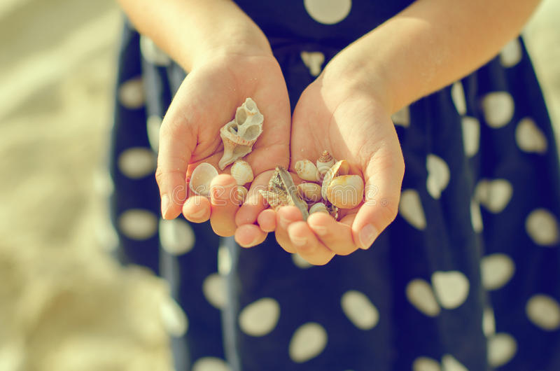 Child hands holding sea shells. royalty free stock photography