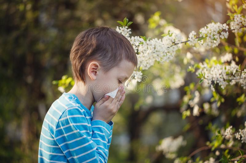 Child having allergy. Boy sitting outdoor with tissue in park near blooming flowers. royalty free stock images