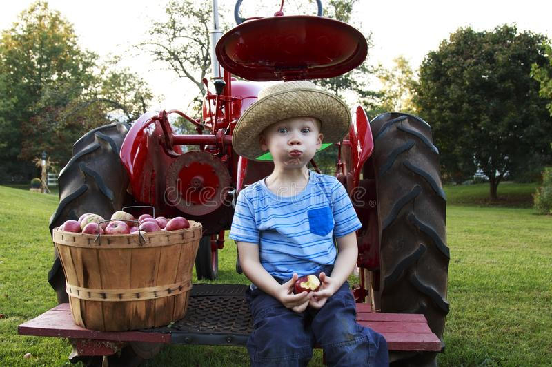 Child having fun apple picking and sitting on a red antique tractor royalty free stock photos