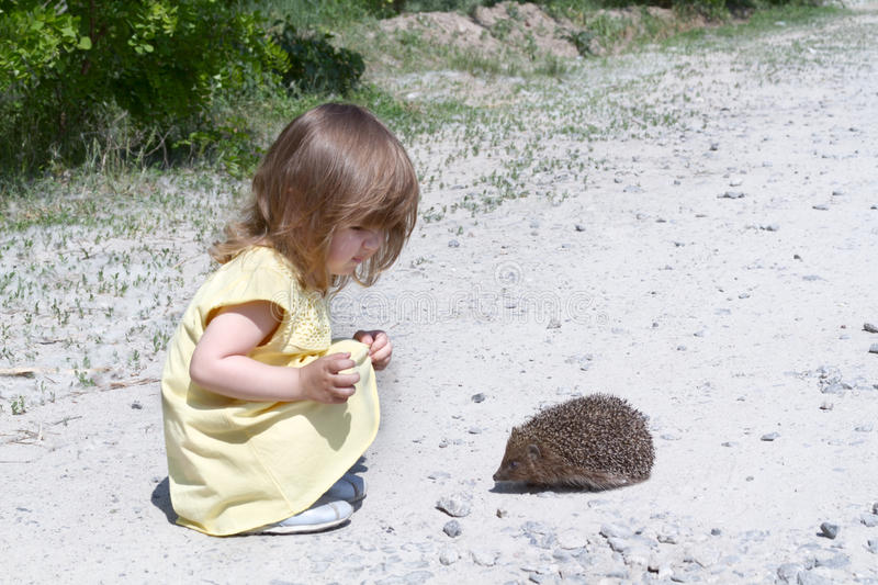 Child and the hedgehog stock image