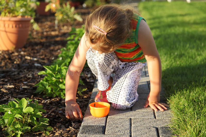 Download Child helping in garden stock photo. Image of strawberry - 18347948